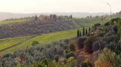 Wine country landscapes Stock Footage
