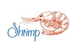 Sketch of red marine shrimp or prawn Piirros