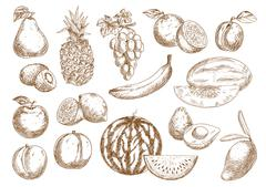 Farm fruits isolated sketches set - stock illustration