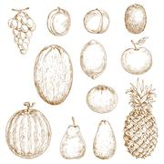 Sketches of fresh harvested fruits - stock illustration