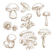 Autumnal forest mushrooms sketches set - stock illustration