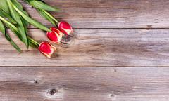 Seasonal tulips on stressed wood background Stock Photos