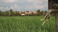 Bali rice field with an altar (sanggah) in front of it Stock Footage
