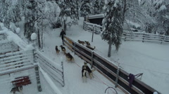 Riding at dog sledge in winter woods, aerial view Stock Footage