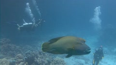 Diving in the Red sea near Egypt. Dive with big fish Napoleon. Stock Footage