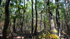 Bright colorful forest in the Seoraksan National Park at autumn. Sokcho Stock Footage