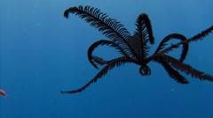 Mesmerizing plastic sea lilies. Stock Footage