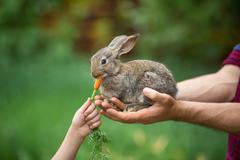Rabbit. Feeding animal - stock photo