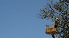 Tree pruning by a man with a chainsaw, standing on a mechanical platform. - stock footage