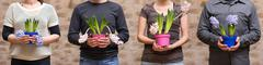 four people holding hyacinths - stock photo