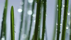 Green Grass In Rain Stock Footage