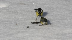 A flock of tits take away a bunch of seeds, lying in the snow Stock Footage