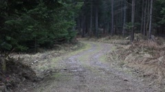 Old forest in Bieszczady Mountains. Little snow falling. Stock Footage