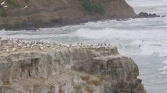Gannet Rock - gannet birds Stock Footage