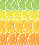 Various Citrus Slices - stock illustration