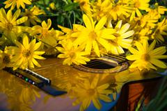Sunny photo of acoustic guitar and white - yellow flowers Stock Photos