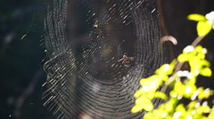 Perfect spider web in the forest in morning sun light Stock Footage