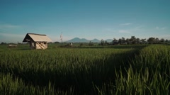 Canggu rice field with a wooden canopy and Mount Batur volcano in background Stock Footage