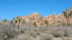Stock Video Footage of Trees and rocks at Joshua Tree national park in California