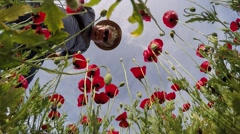 Poppy flowers and other flowers look at a nature lover Stock Footage