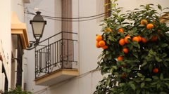 Orange tree in Estepona, Andalusia, fruit Stock Footage