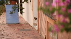 Cat at street, animal, Spain, Andalucia Stock Footage