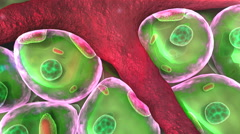 Human cell and Vein Stock Footage