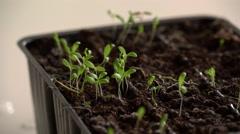 Watering of Seedling - stock footage