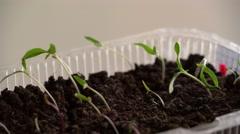 Stock Video Footage of Watering of Seedling