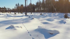 Aerial footage. Low altitude flight. Winter landscape. Sunny day. Winter forest Stock Footage