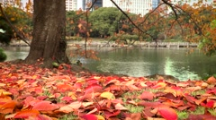 Beautiful red autumn leaves with tree and lake in background.  Stock Footage
