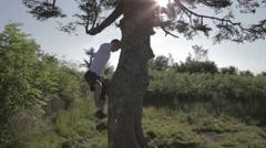 Man Climbing Tree On Mountain Top - stock footage