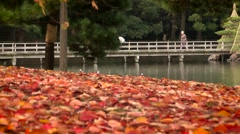 Red autumn leaves on the ground. Red leafs on ground. Stock Footage