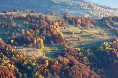 Colorful trees on slope in autumn Carpathian. Stock Photos