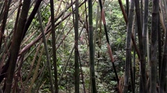 Amazonian bamboo jungle trees. Stock Footage