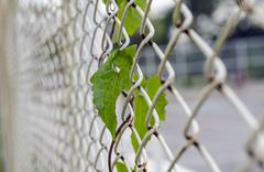 Green leaf on Steel wire mesh Stock Photos