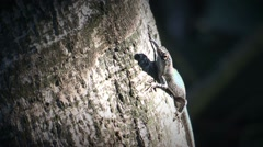 Lizard checking environment. Lizard on a tree. Stock Footage