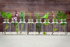 Bottle of essential oil with herbs holy basil flower, basil flower,rosemary,o Stock Photos