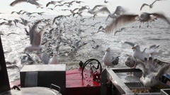 Masses of seagulls behind a shrimp boat Stock Footage