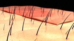 Close up of Skin Anatomy, animation Stock Footage