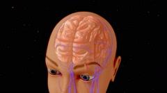 Anatomy of Brain - stock footage