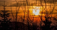 Sunset Branches Timelapse 4k Stock Footage