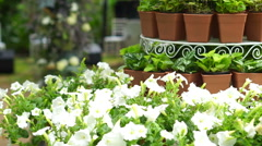 Green plant pot tier set up for wedding ceremony in romantic garden Stock Footage