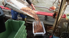 The catch of the day on a shrimp boat Stock Footage