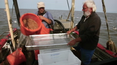 The cooked crabs on board of the shrimp boat checked again. - stock footage