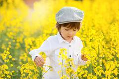 Cute adorable child, boy, in an oilseed rape field - stock photo
