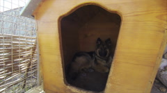 Dog German Shepherd Sitting in a Booth Stock Footage