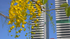 Spring flowers in modern city Stock Footage