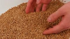 Grain in hands Stock Footage