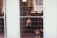 two cute strayed dogs in dog shelter - stock photo